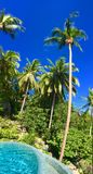 Piscine et palmiers dans le paysage tropical Photo stock