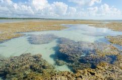 Piscine naturelle au Brésil Images stock