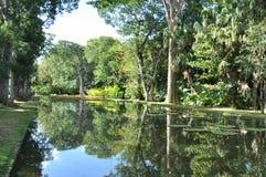 Piscine se reflétante dans un jardin botanique Photos libres de droits