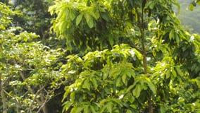 Piscine tropicale dans la jungle banque de vidéos