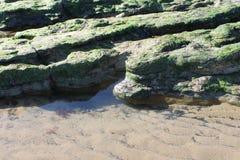 Piscines de roche avec l'algue sur la plage Photographie stock libre de droits