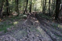Piscines et chemin de terre humide Image libre de droits