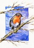 Pisco de peito vermelho ilustração royalty free