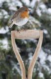 Pisco de peito vermelho do Natal na neve Fotografia de Stock Royalty Free