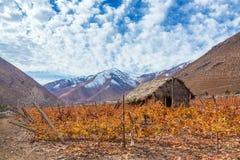 Pisco Vineyard Stock Image