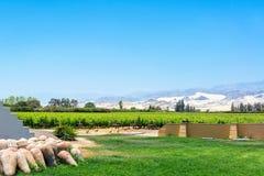 Pisco Vineyard in Peru Stock Photo