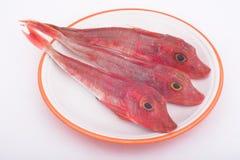 Piscos de peito vermelho do mar Fotografia de Stock