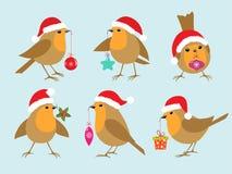 Piscos de peito vermelho do Natal Fotografia de Stock Royalty Free