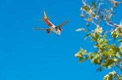 PISE - 25 AOÛT 2015 : Vol d'Easyjet en aéroport de Galilée Easyj Images libres de droits