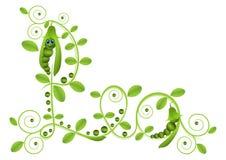 Piselli con le foglie royalty illustrazione gratis