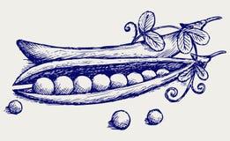 Piselli freschi illustrazione di stock