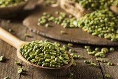 Piselli secchi rotti verdi organici crudi Immagini Stock