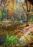 Pisgah Forest in Autumn Stock Image