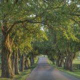 Pisgah-Weg in Lexington, Kentucky Lizenzfreie Stockbilder