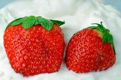 piskade kräm- jordgubbar Royaltyfria Foton