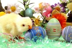 pisklęcy Easter Obrazy Royalty Free