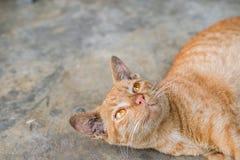Piso amarillo de Tabby Cat Lovely Relax On The Imagen de archivo