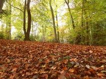 Piso de Autumn Forest Imagen de archivo libre de regalías