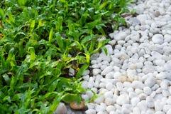 Piso de la hierba y de la grava en jardín Foto de archivo