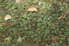 Piso de la mala hierba Imagenes de archivo