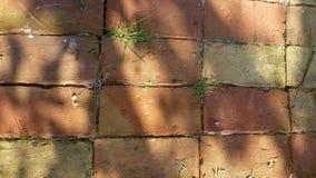 Piso de ladrillos Imagen de archivo libre de regalías