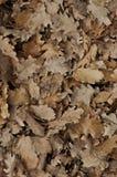 Piso del bosque de hojas muertas marrones Imagen de archivo libre de regalías