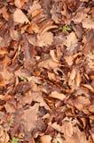 Piso del bosque de hojas muertas marrones Fotos de archivo libres de regalías