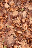 Piso del bosque de hojas muertas marrones Fotos de archivo
