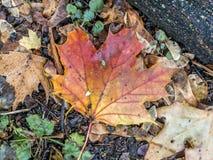Piso del bosque de las hojas de otoño Fotos de archivo