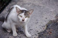 Piso perdido del gris del gato foto de archivo libre de regalías