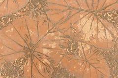 Pisos concretos con diseños de hojas Fotografía de archivo