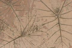 Pisos concretos con diseños de hojas Fotos de archivo