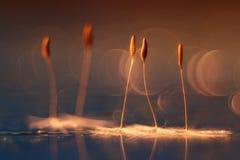 Pissenlit d'orange brouillé par résumé de fond naturel Photo libre de droits