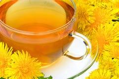 Pissenlit de thé Photos libres de droits