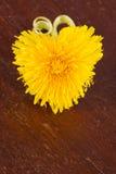 Pissenlit en forme de coeur Image libre de droits