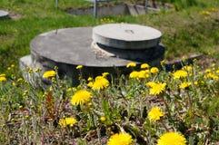 Pissenlit parmi des fleurs photo libre de droits
