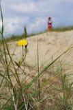 Pissenlit sur la plage Photos libres de droits