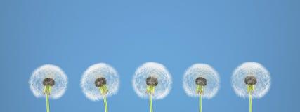 Pissenlit sur le fond coloré rendu 3d Image libre de droits
