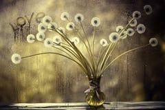 Pissenlits dans le vase blanc sur la fenêtre Photo libre de droits