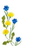 Pissenlits et bleuets Image stock