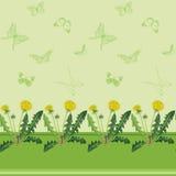Pissenlits jaunes et papillons verts Images libres de droits