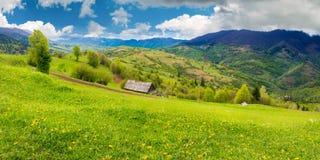 Pissenlits sur le champ rural en montagnes images libres de droits