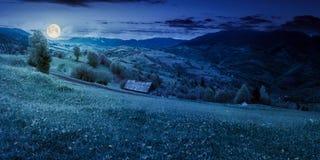 Pissenlits sur le champ rural en montagnes la nuit photographie stock