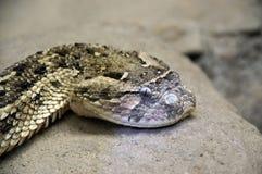 pista 1 de la serpiente del traqueteo Foto de archivo libre de regalías