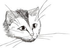 Pista agradable del gatito Fotos de archivo libres de regalías