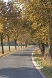 Pista alinhada árvore no outono fotografia de stock