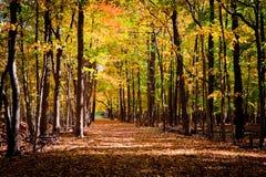 Pista attraverso la foresta di autunno Fotografia Stock Libera da Diritti