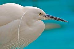 Pista blanca del pájaro Imagenes de archivo