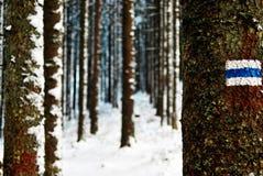 Pista blu nella foresta di inverno fotografia stock