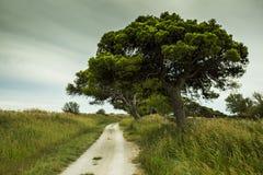 Pista ciclabile Mediterranea Fotografia Stock